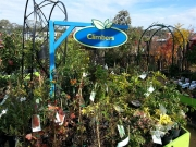 Howrah Nursery Plants (10)