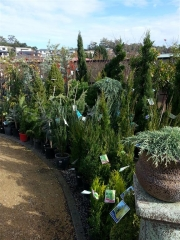 Howrah Nursery Plants (19)