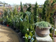 Howrah Nursery Plants (20)