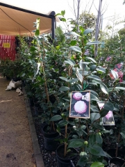 Howrah Nursery Plants (3)