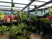 Howrah Nursery Plants (35)