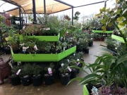 Howrah Nursery Plants (7)