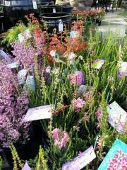 Howrah Nursery Plants (1)