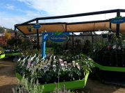 Howrah Nursery Plants (11)