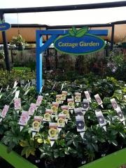 Howrah Nursery Plants (12)