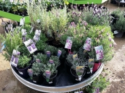 Howrah Nursery Plants (13)