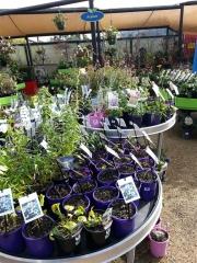 Howrah Nursery Plants (14)