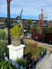 Howrah Nursery Plants (15)