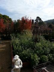 Howrah Nursery Plants (16)