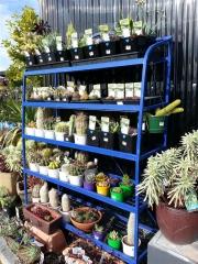 Howrah Nursery Plants (17)