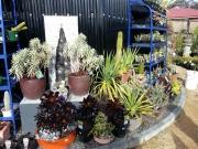 Howrah Nursery Plants (18)