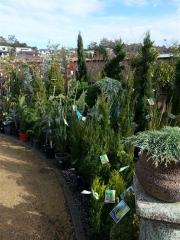 Howrah Nursery Plants (19)