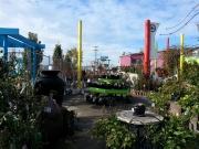 Howrah Nursery Plants (2)