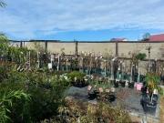Howrah Nursery Plants (21)