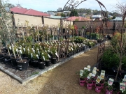 Howrah Nursery Plants (22)