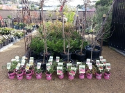 Howrah Nursery Plants (23)