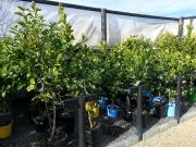 Howrah Nursery Plants (24)