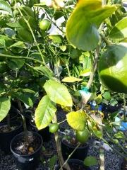 Howrah Nursery Plants (26)