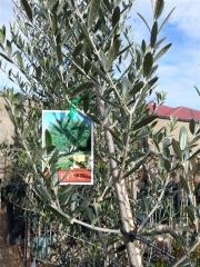 Howrah Nursery Plants (27)