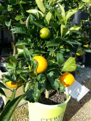 Howrah Nursery Plants (28)