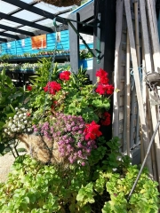 Howrah Nursery Plants (30)