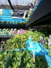 Howrah Nursery Plants (31)