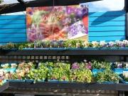 Howrah Nursery Plants (32)