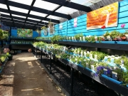 Howrah Nursery Plants (33)