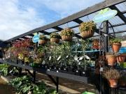 Howrah Nursery Plants (34)