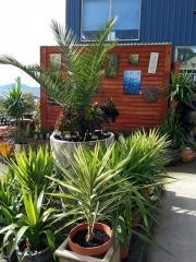Howrah Nursery Plants (36)