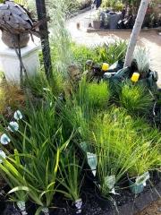 Howrah Nursery Plants (37)