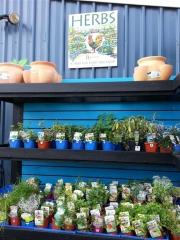 Howrah Nursery Plants (38)