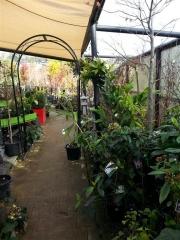 Howrah Nursery Plants (4)