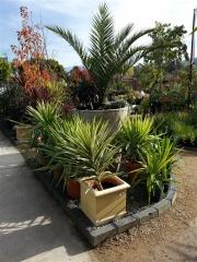 Howrah Nursery Plants (41)