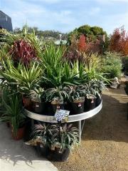 Howrah Nursery Plants (42)