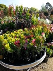 Howrah Nursery Plants (43)