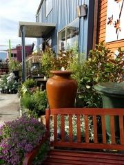 Howrah Nursery Plants (44)