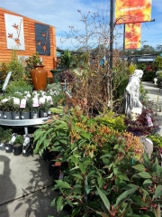 Howrah Nursery Plants (45)