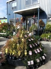 Howrah Nursery Plants (46)