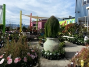Howrah Nursery Plants (47)