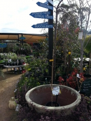 Howrah Nursery Plants (48)