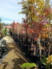 Howrah Nursery Plants (5)