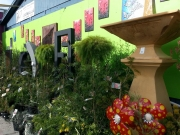 Howrah Nursery Plants (50)