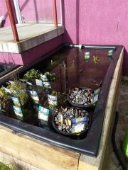Howrah Nursery Plants (51)
