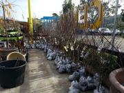 Howrah Nursery Plants (53)