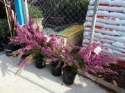 Howrah Nursery Plants (54)