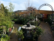 Howrah Nursery Plants (55)