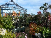 Howrah Nursery Plants (56)