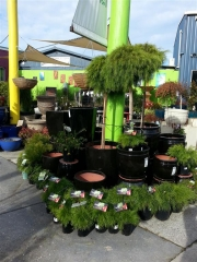 Howrah Nursery Plants (57)