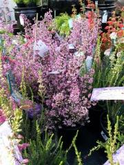 Howrah Nursery Plants (58)